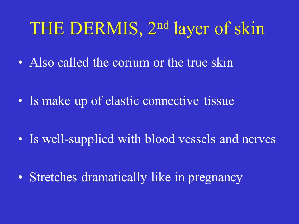 THE DERMIS, 2nd layer of skin