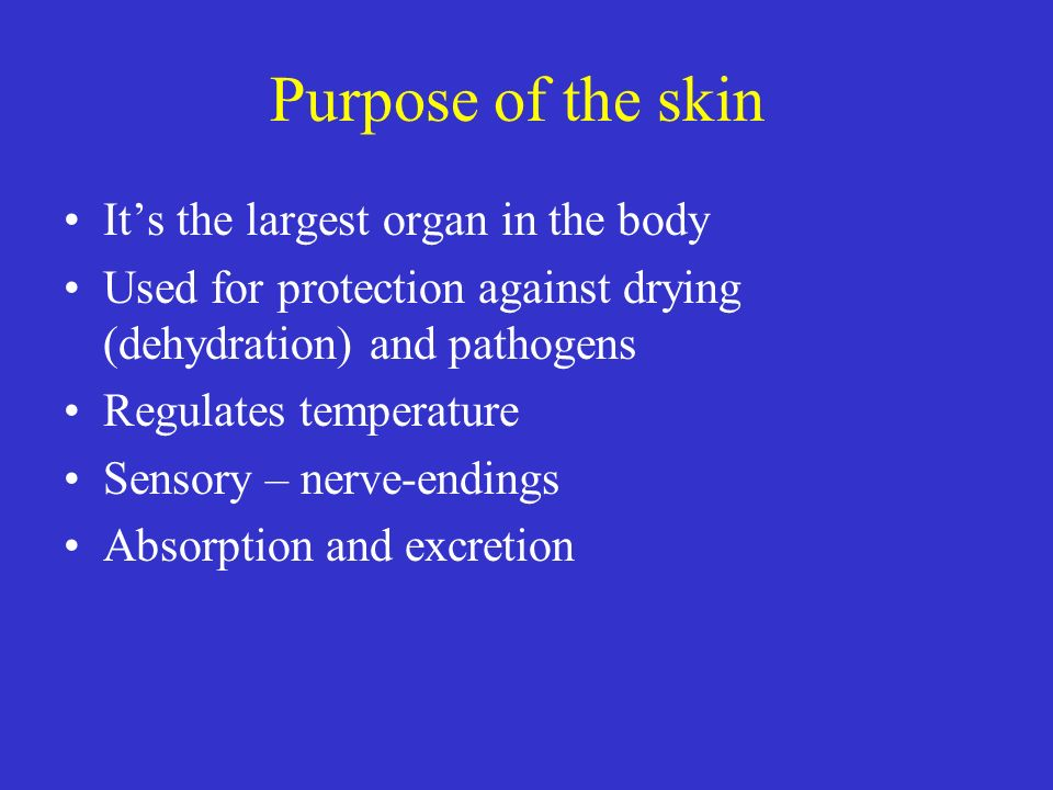 Purpose of the skin It's the largest organ in the body