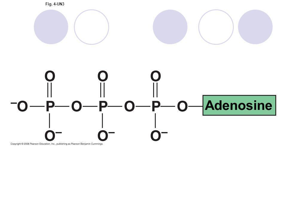 Fig. 4-UN3 Adenosine
