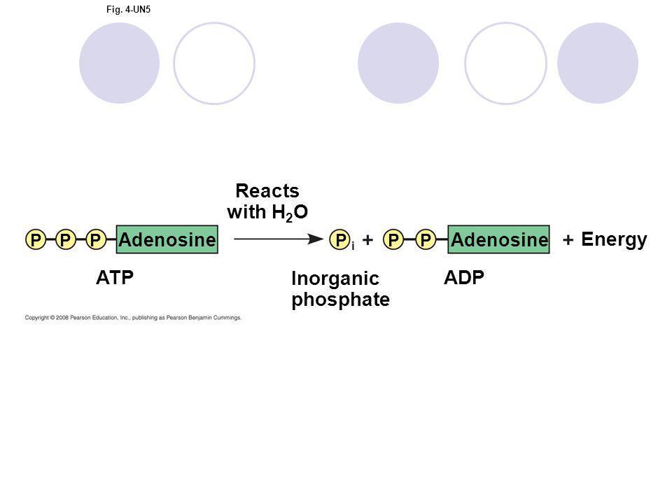 Reacts with H2O Energy ATP Inorganic phosphate ADP Adenosine Adenosine