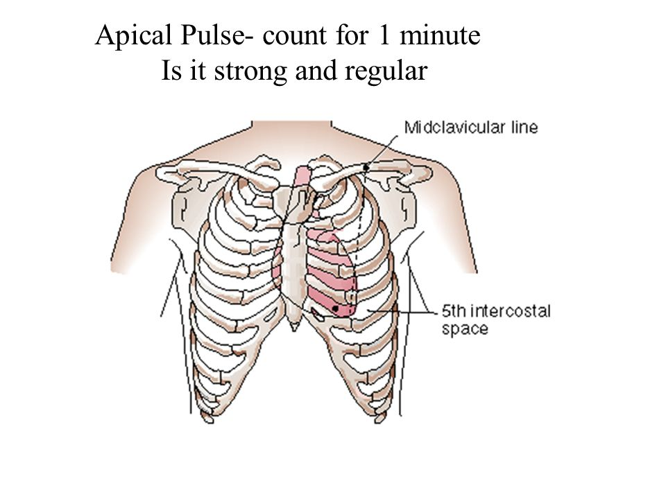 Apical Pulse- count for 1 minute