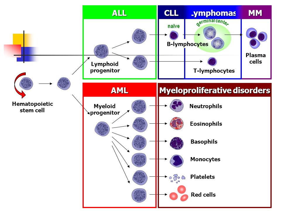 Autologous ROR1R-CAR-T Cells for Chronic Lymphocytic Leukemia (CLL)