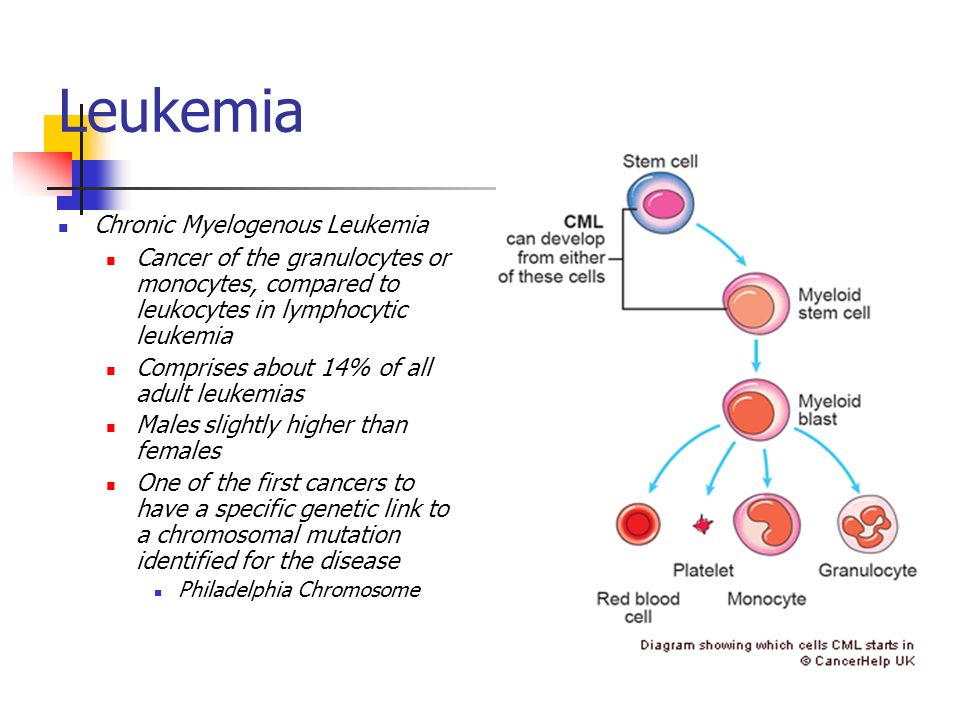 conclusion for leukemia This is an inspirational and true ongoing story about a family that is suffering with leukaemia we do | check out 'the leukaemia conclusion' on indiegogo.