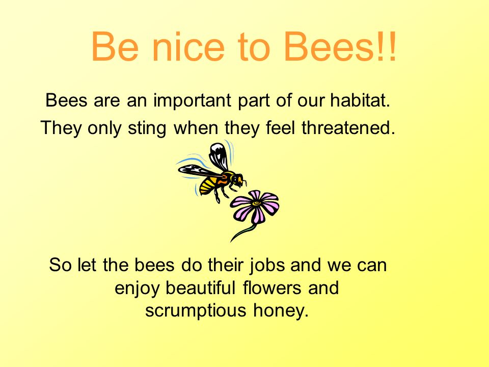 Be nice to Bees!! Bees are an important part of our habitat.