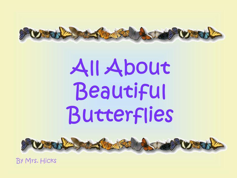 All About Beautiful Butterflies