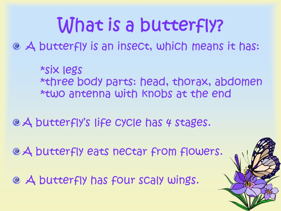What is a butterfly