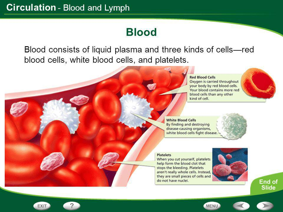 - Blood and Lymph Blood.