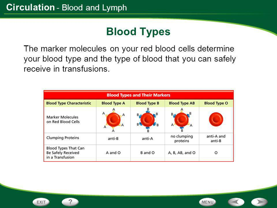 Blood Types - Blood and Lymph
