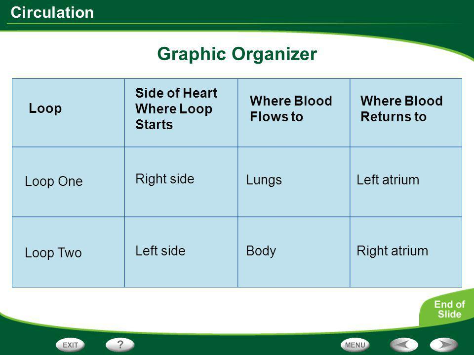 Graphic Organizer Side of Heart Where Loop Starts Where Blood Flows to