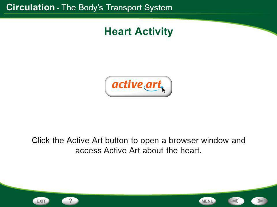 Heart Activity - The Body's Transport System