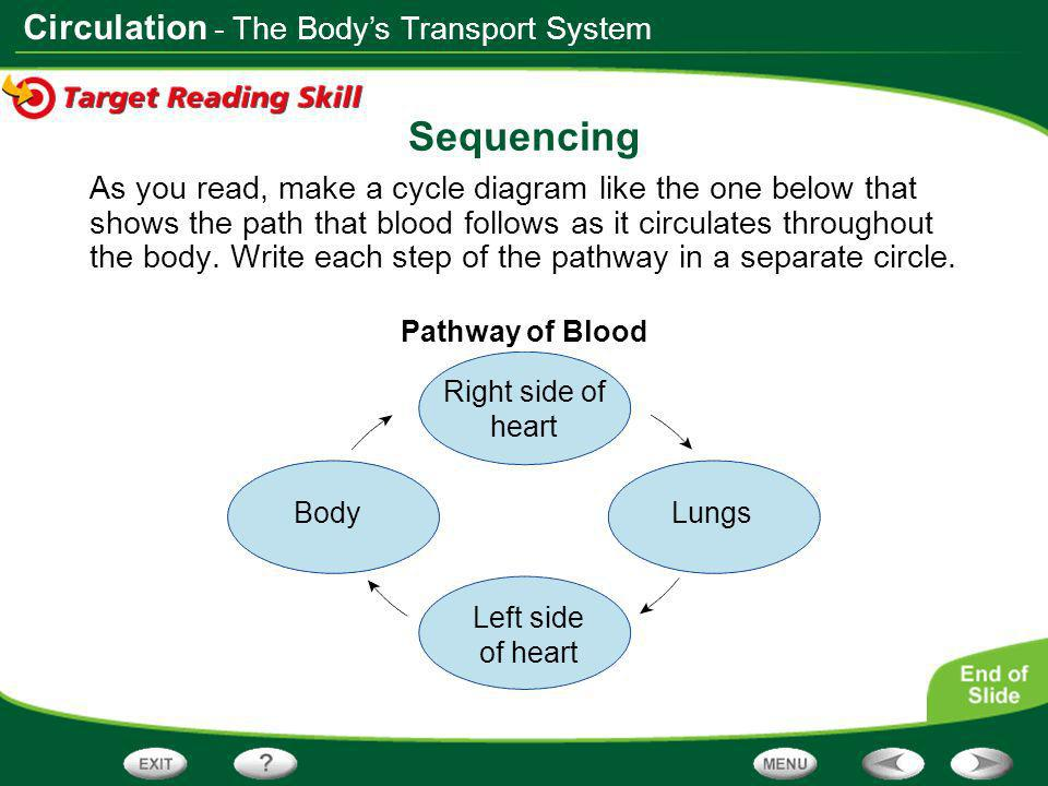 Sequencing - The Body's Transport System