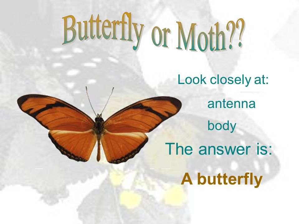 The answer is: A butterfly Butterfly or Moth Look closely at: