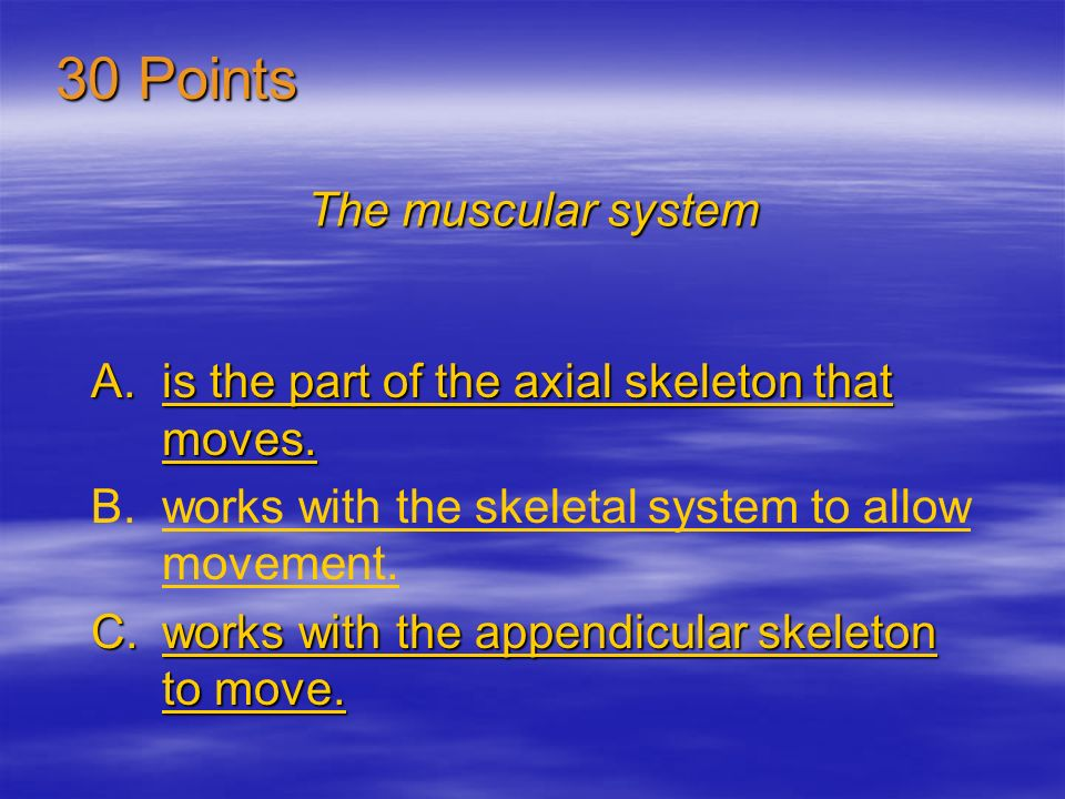 30 Points The muscular system