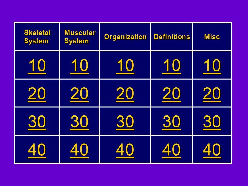 10 20 30 40 Skeletal System Muscular System Organization Definitions