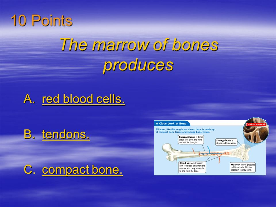 The marrow of bones produces