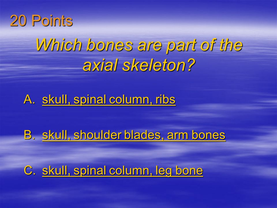Which bones are part of the axial skeleton