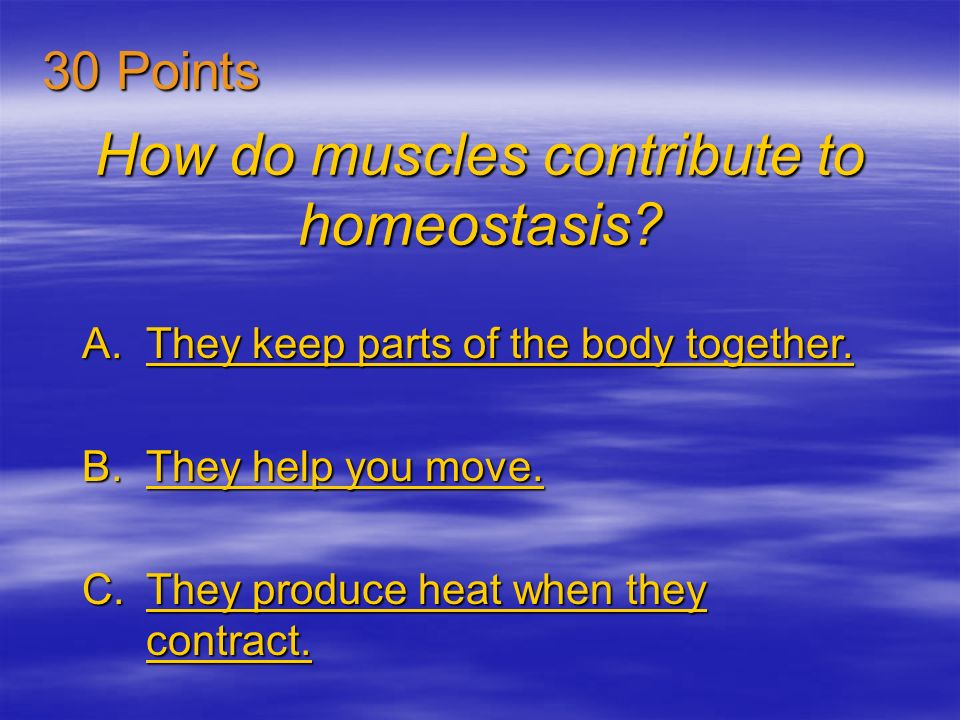How do muscles contribute to homeostasis