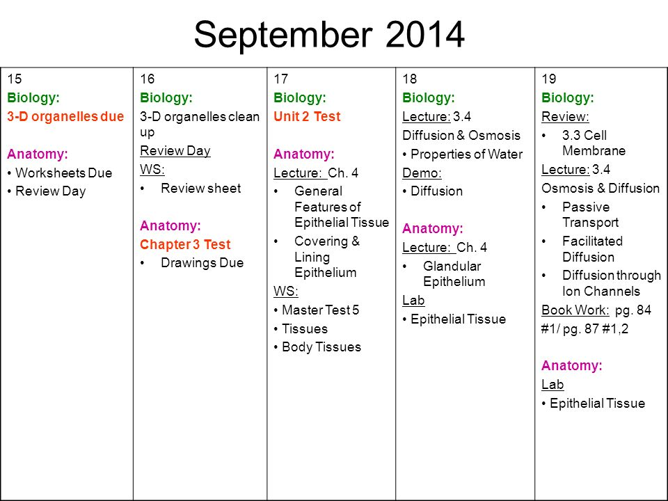 August First Day of School Biology Syllabus Anatomy ppt download – Body Tissues Worksheet