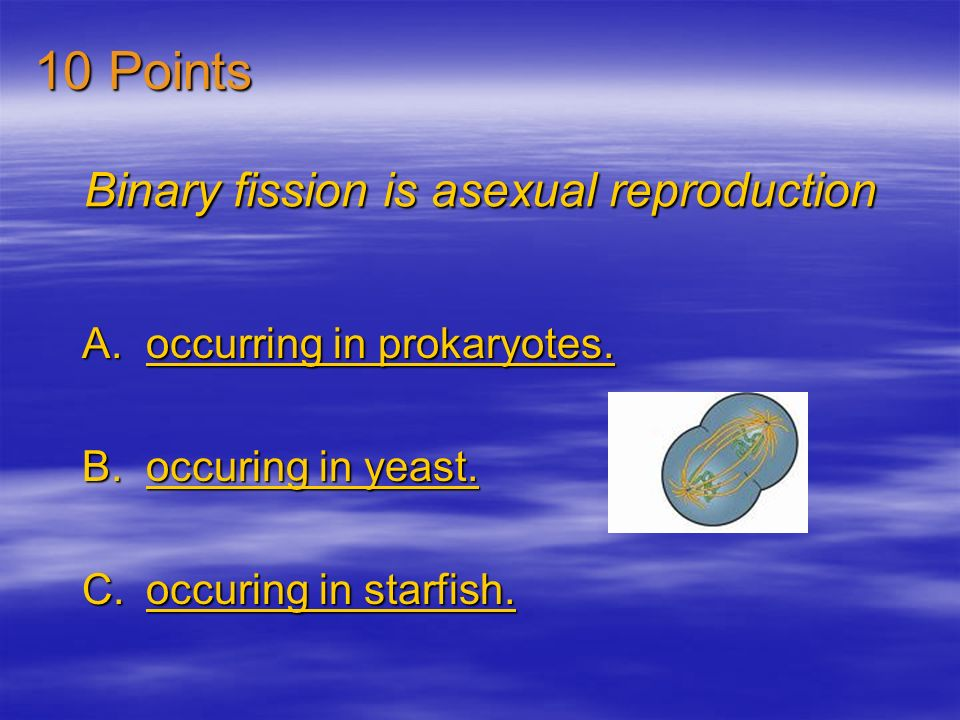 Binary fission is asexual reproduction