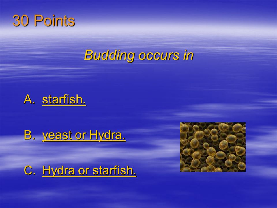 30 Points Budding occurs in starfish. yeast or Hydra.