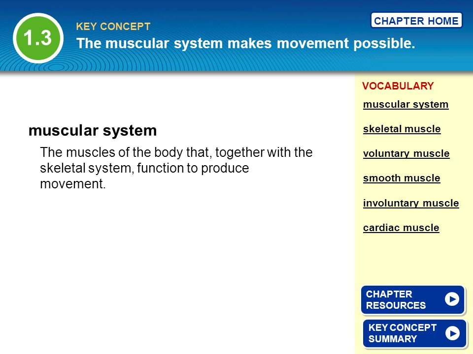 1.3 muscular system The muscular system makes movement possible.