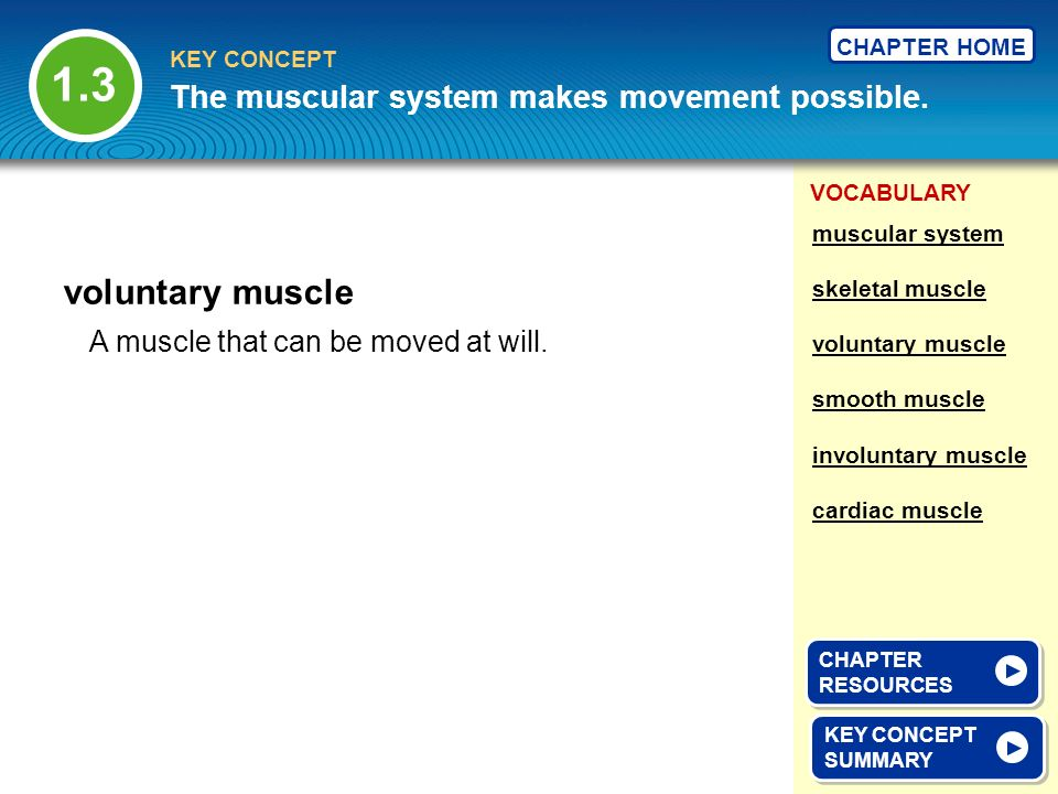 1.3 voluntary muscle The muscular system makes movement possible.