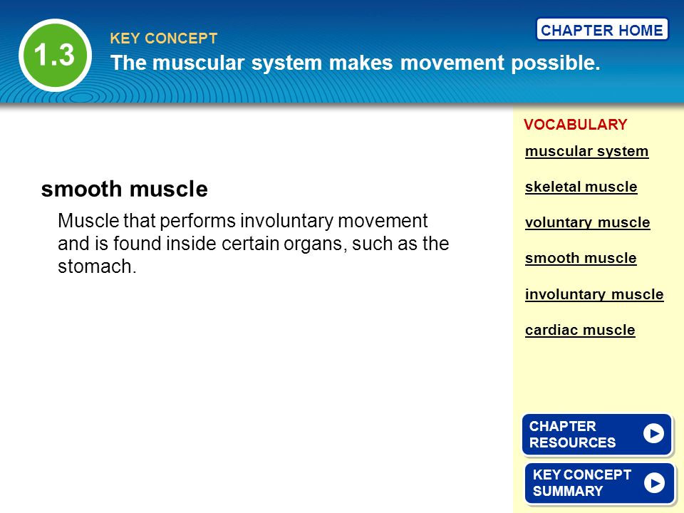1.3 smooth muscle The muscular system makes movement possible.