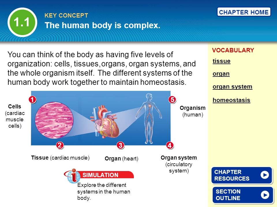 The human body is complex.