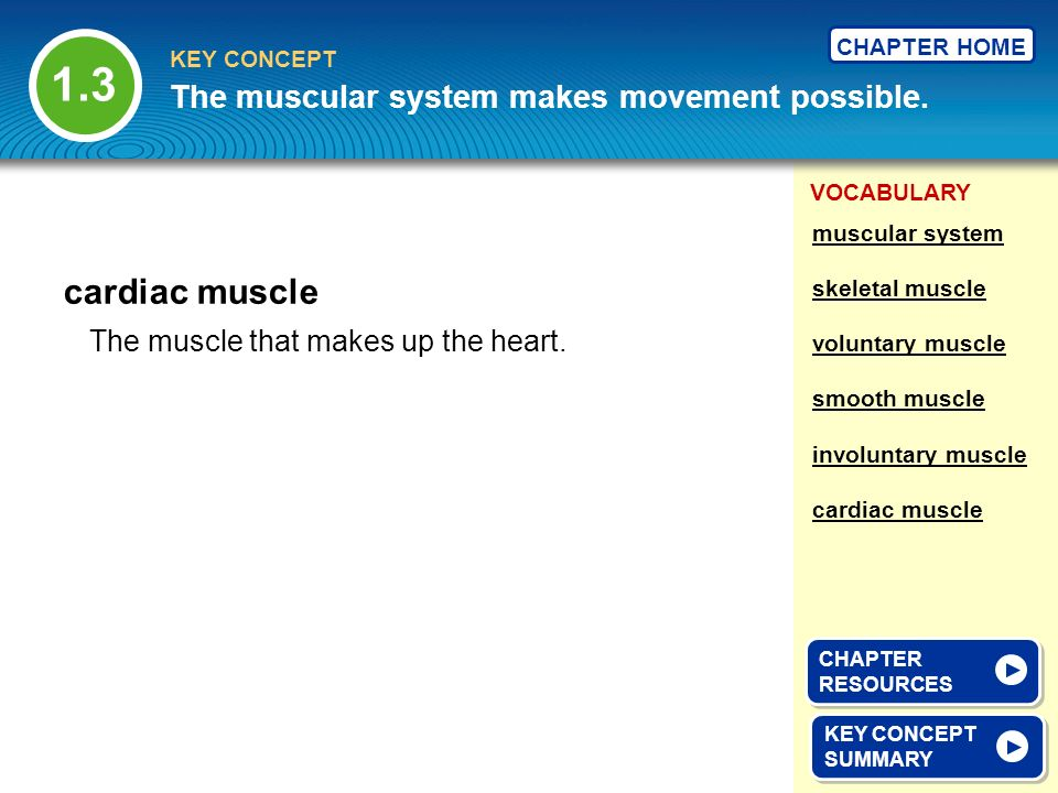 1.3 cardiac muscle The muscular system makes movement possible.