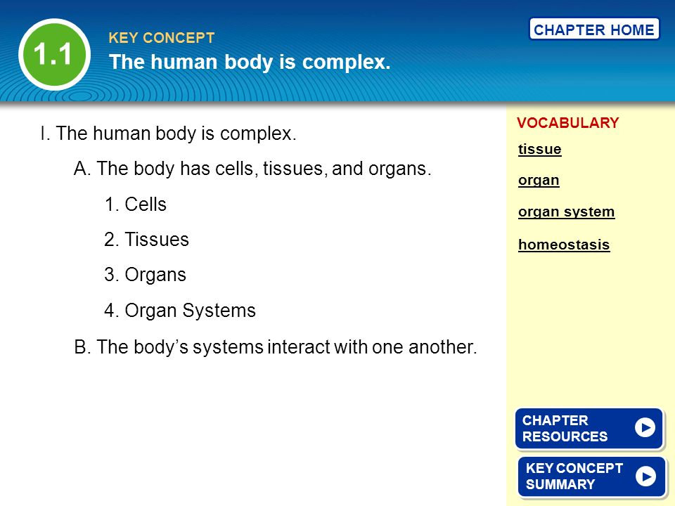 1.1 The human body is complex. I. The human body is complex.