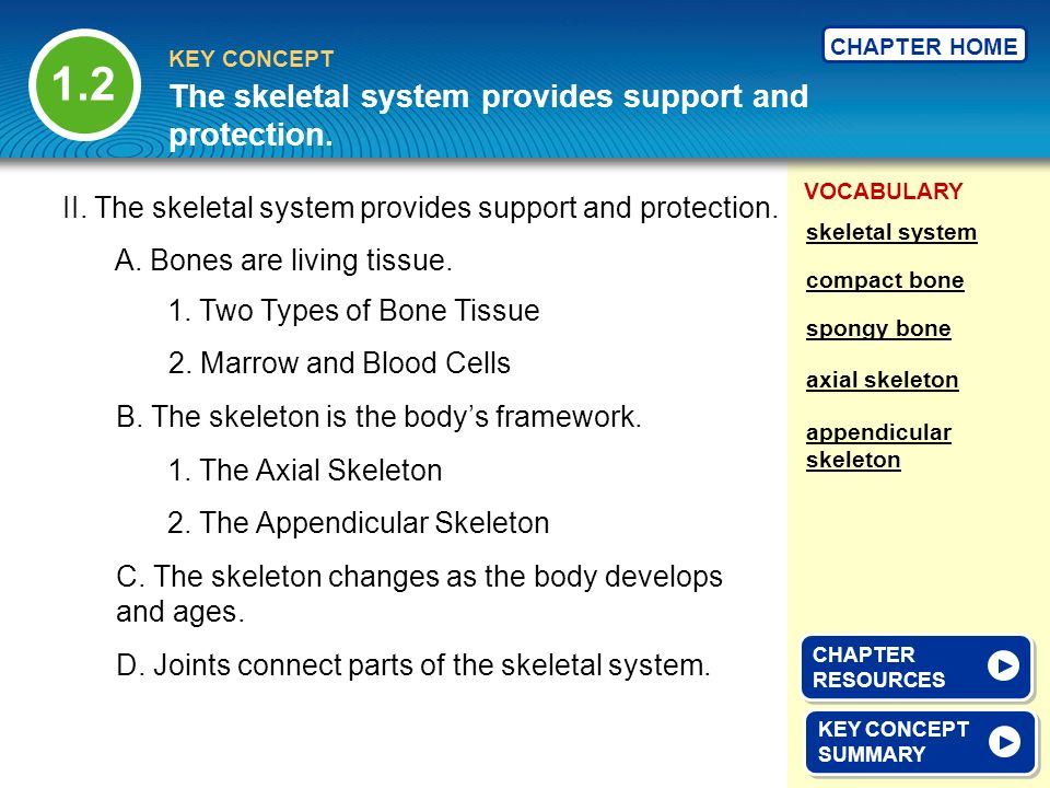 The skeletal system provides support and protection.