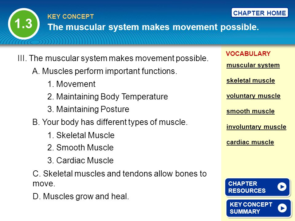 The muscular system makes movement possible.