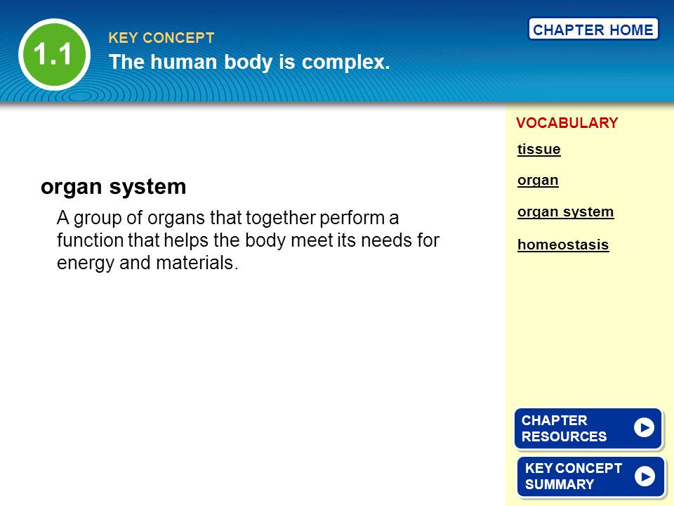 1.1 organ system The human body is complex.