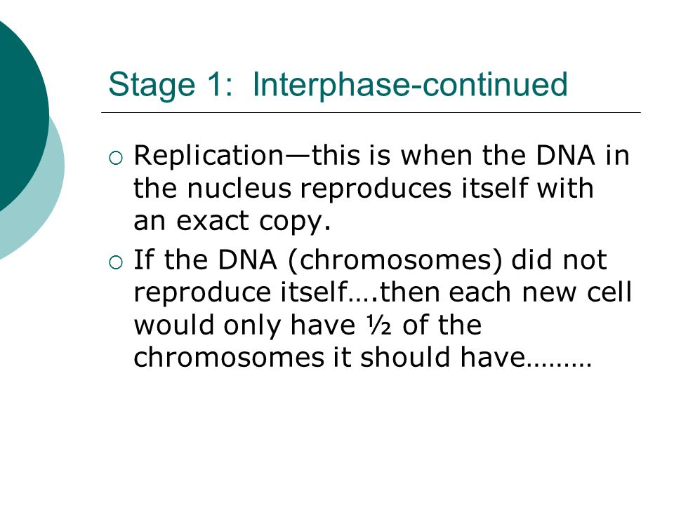 Stage 1: Interphase-continued