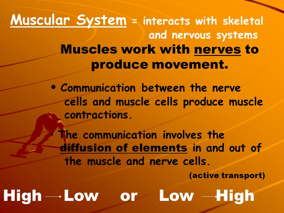 Muscles work with nerves to produce movement.