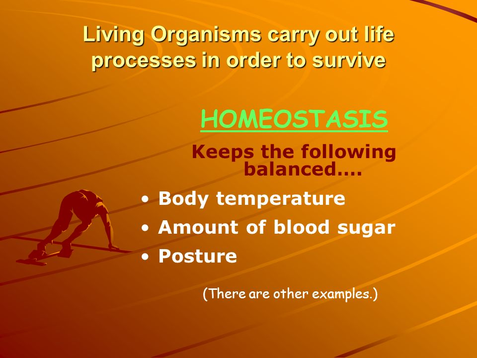 Living Organisms carry out life processes in order to survive