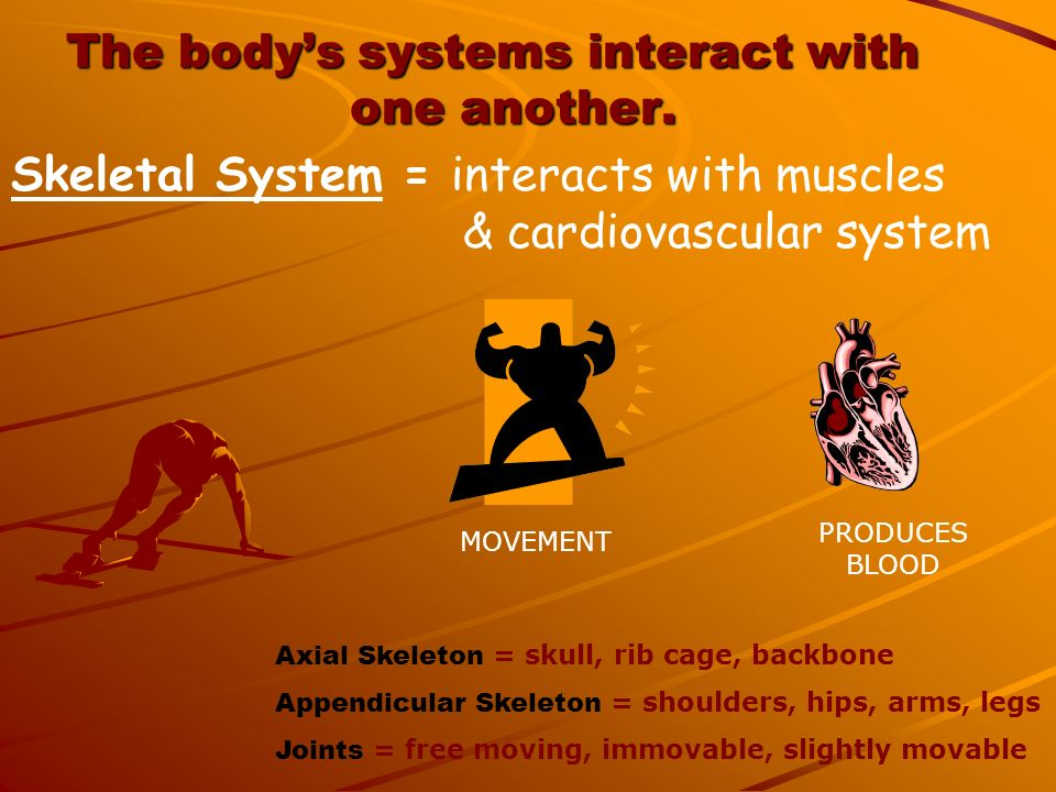 The body's systems interact with one another.