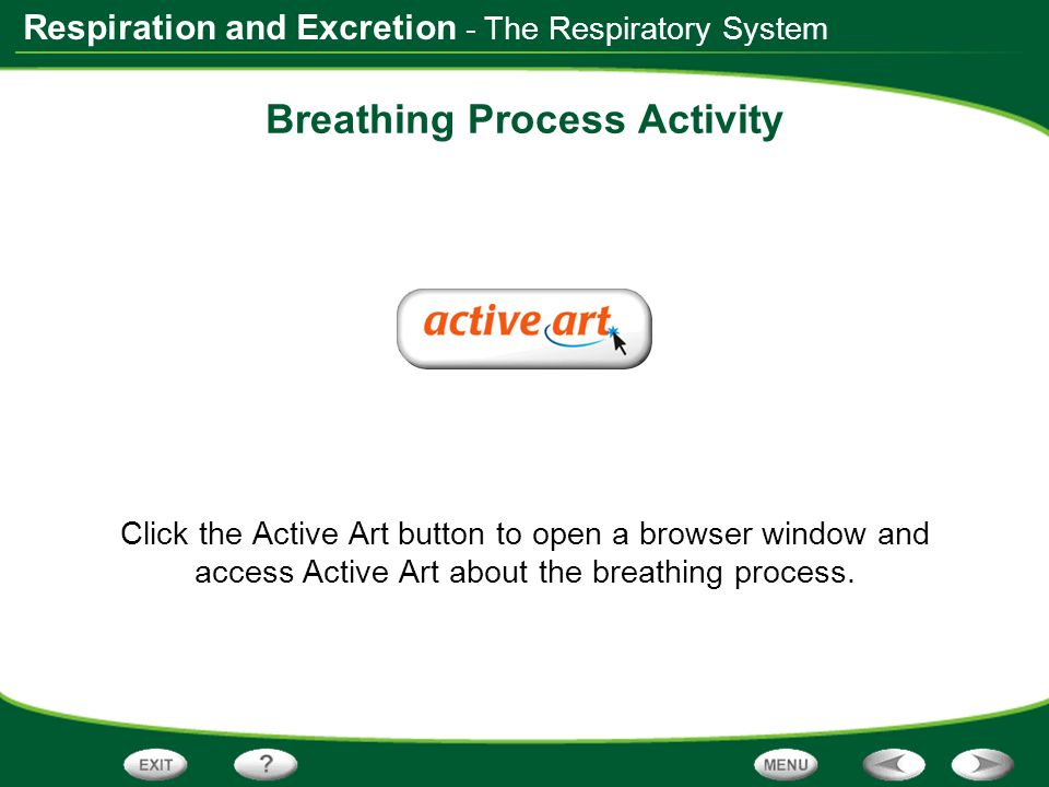 Breathing Process Activity