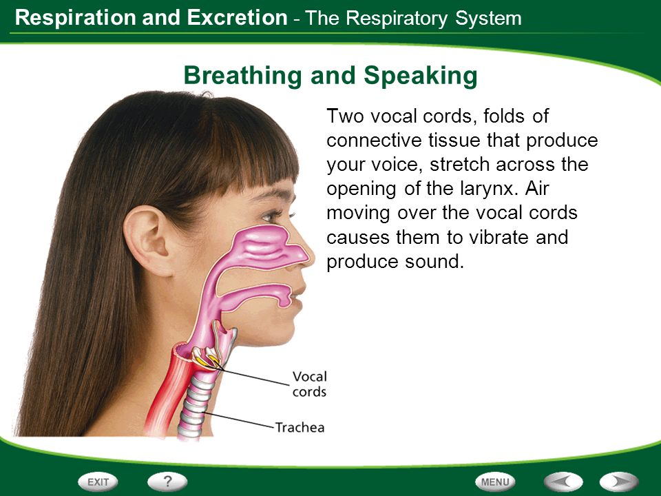 Breathing and Speaking