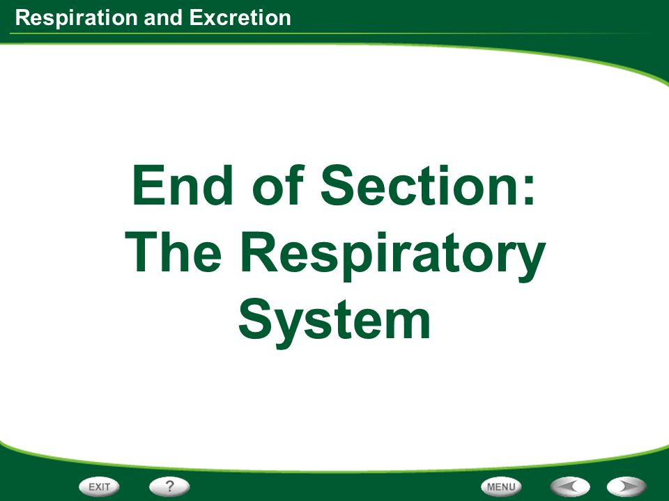 End of Section: The Respiratory System