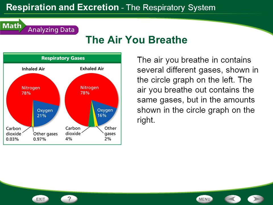 The Air You Breathe - The Respiratory System