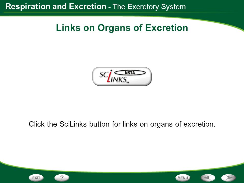 Links on Organs of Excretion