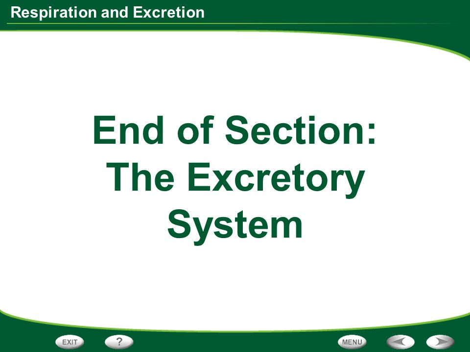End of Section: The Excretory System