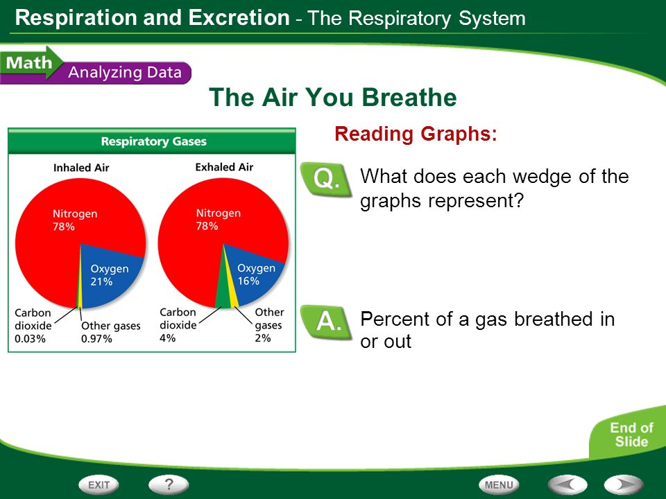 The Air You Breathe - The Respiratory System Reading Graphs: