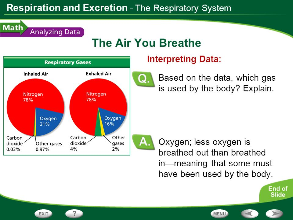 The Air You Breathe - The Respiratory System Interpreting Data:
