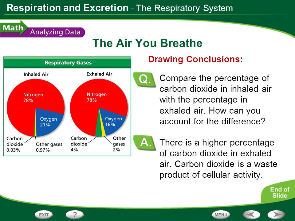 The Air You Breathe - The Respiratory System Drawing Conclusions: