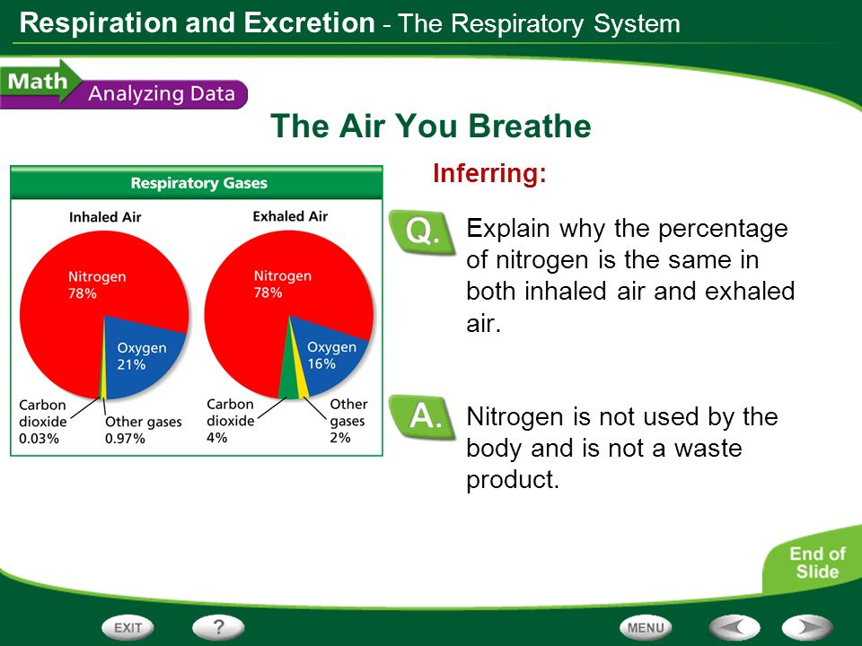 The Air You Breathe - The Respiratory System Inferring: