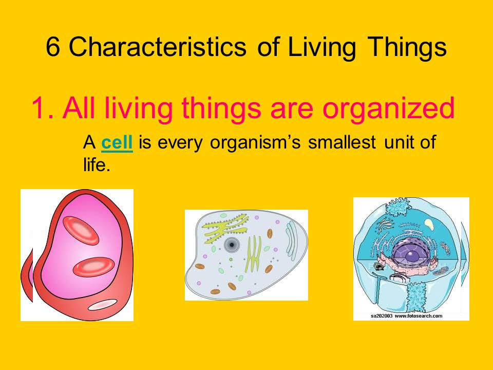 What characteristics do all living things share? - ppt download