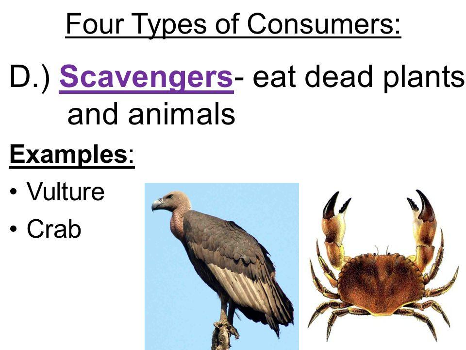 Scavenger  Wikipedia