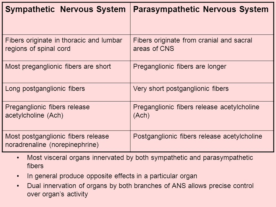 The Peripheral Nervous System: Efferent Division - ppt ...